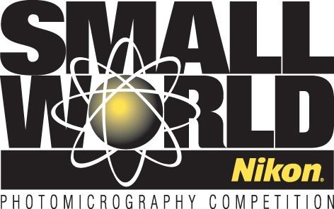Nikon Small World Photomicrography Contest