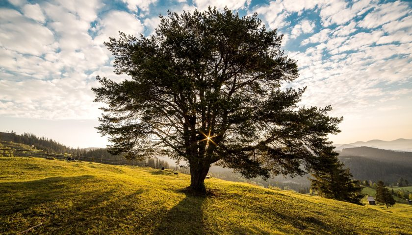 Tree of the Year Nepal Photography Competition